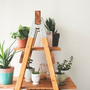 match house plants to flooring