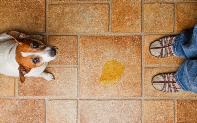 pet mess on floor