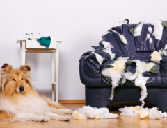 dog chewed furniture